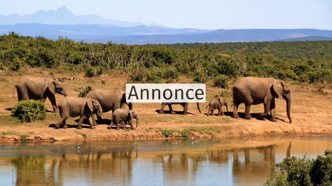 Nyd en dejlig safarirejse i Kenya